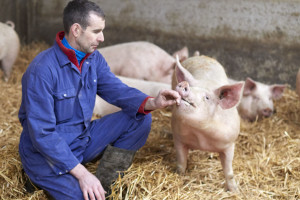 Bio Planet lokaal-zero-waste-varkensvlees-2