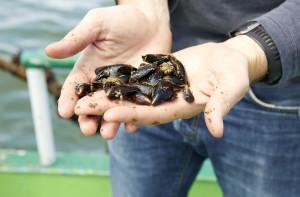Belgische mosselen - op zee (1)