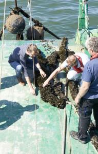 Belgische mosselen - op zee (3)